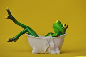 frog-1249568_640